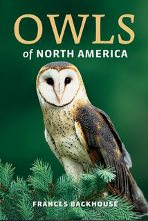 Owls of North America